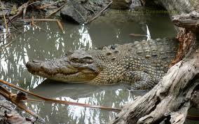 Zambia: Seven year old boy escapes death after a crocodile attack