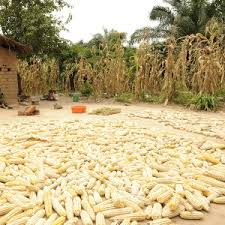 Zambia: FRA to only buy maize from farmers for Strategic Reserves-Sichinga