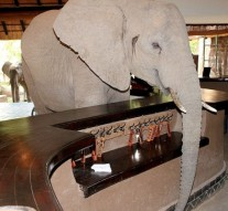 Hotel guests' treat as elephants invade Mfuwe lodge lobby
