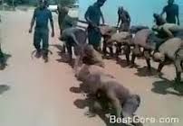 Zambia: See Leaked torture video that cost ZNS instructors their jobs